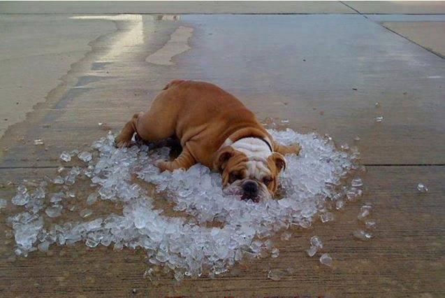 هوای گرم به این سگ هم رحم نکرده !